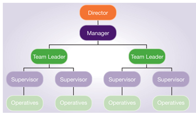 organizational structure - Assignment Help UK