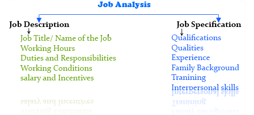 job analysis - Assignment Help UK