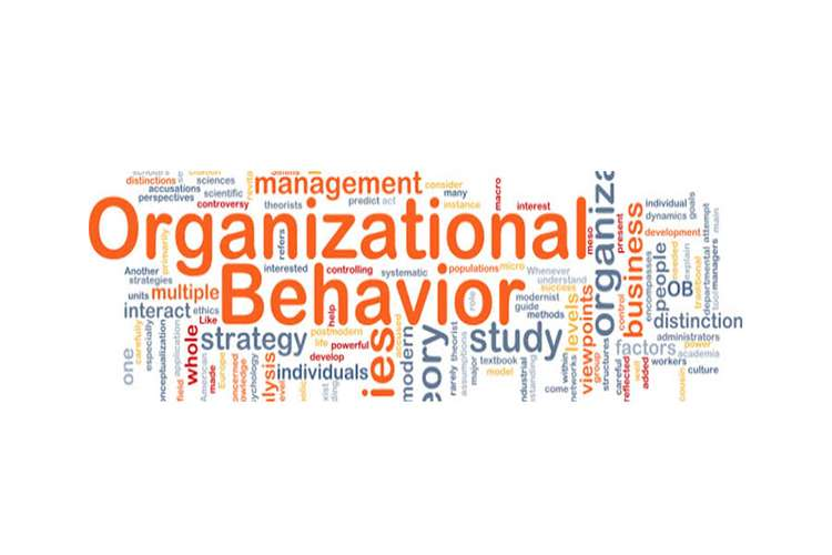 MGT202 Organizational behaviour Assignments Solution