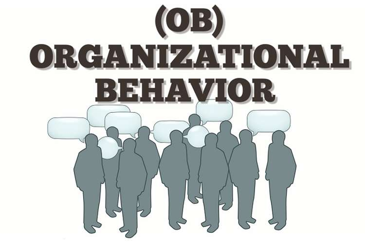 Organization Behavior Oz Assignments