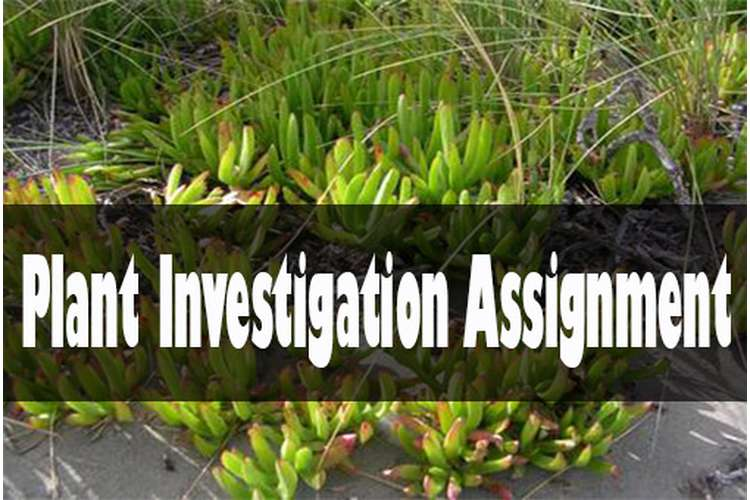 plant Investigation Assignment