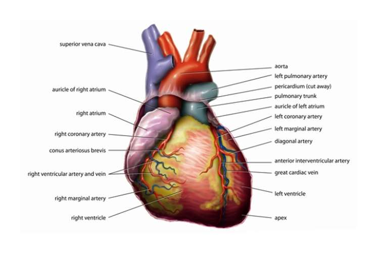 Coronary Artery Disease Exploration Oz Assignment