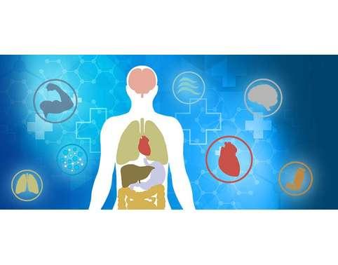 Human Physiology OZ Assignment Help