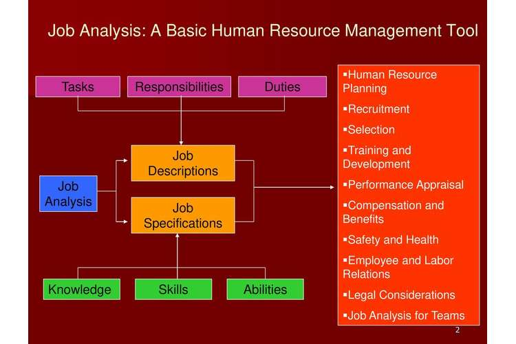 Human Resources Job Analysis Assignments Solution