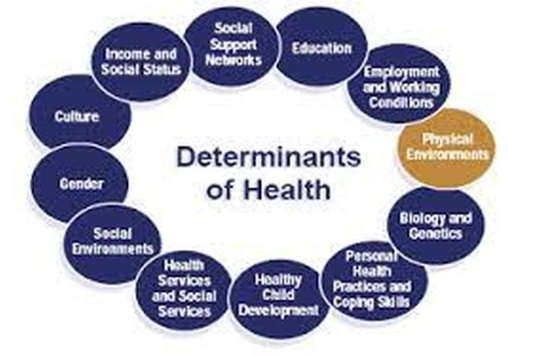 NUR115 Social Determinants of Health Assignment Help
