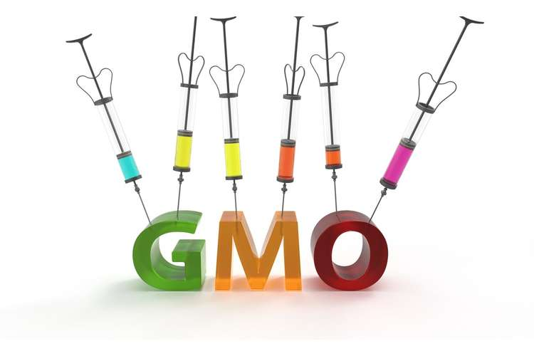 Genetically Modified Organisms Assignment Help