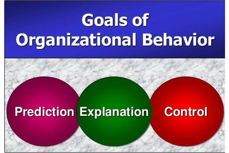Organisational Behavior Assignment